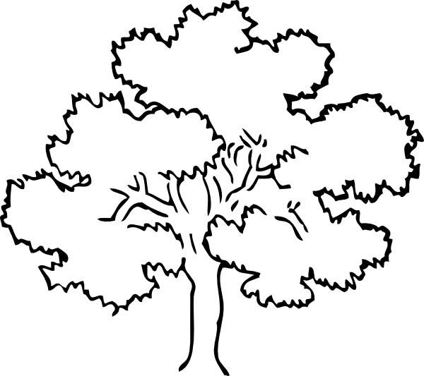 Oak Tree Line Drawing At Getdrawings Com