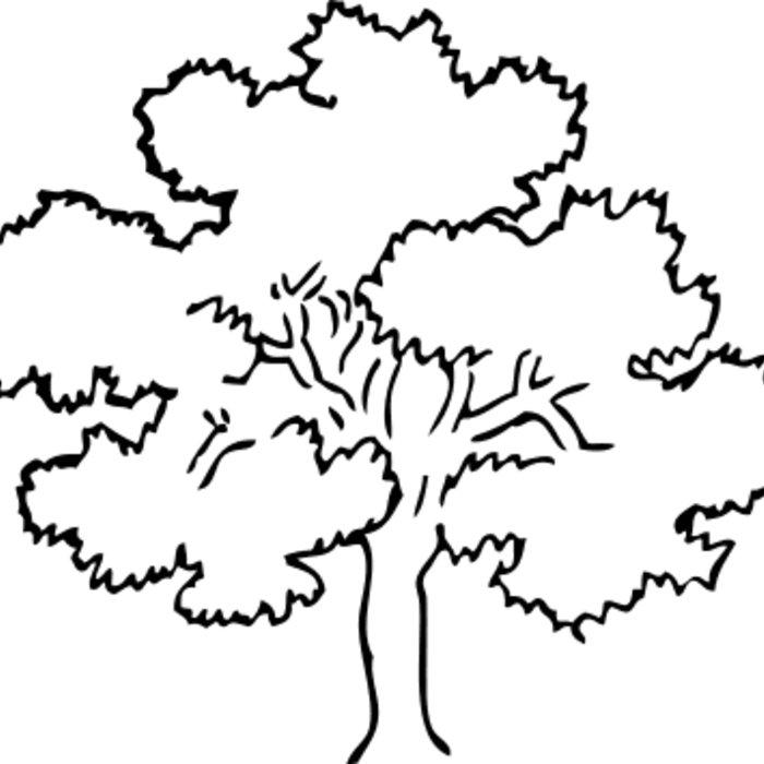 700x700 Oak Tree Oak Tree