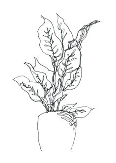 236x333 Clipart Of A Retro Vintage Black And White Oat Plant