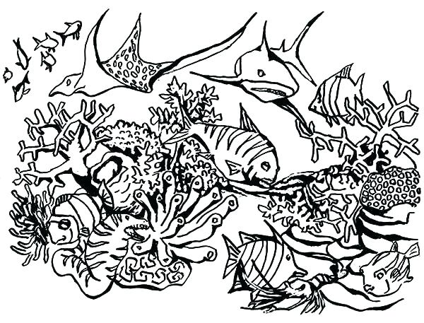 600x457 Coral Reef Coloring Sheet Coral Reef Coloring Pages 1table.co