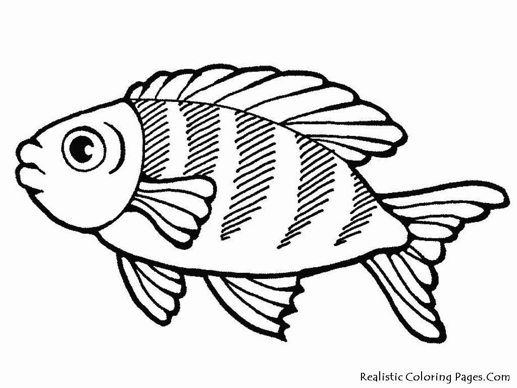 1024x768 sea fish coloring pages