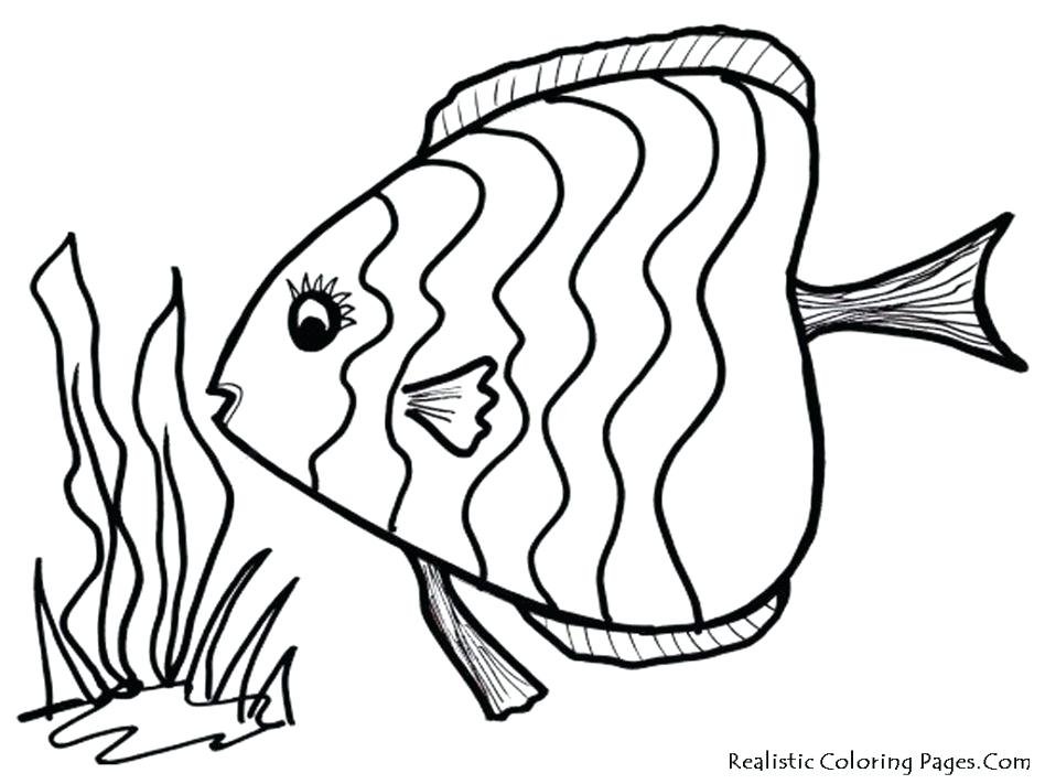 948x711 Bass Coloring Pages Top Printable Fish Pictures Of
