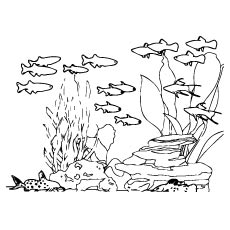 Ocean Life Drawing