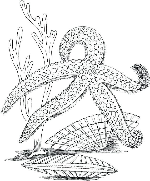 630x763 Marine Life Coloring Pages Ocean Animals A Habitat
