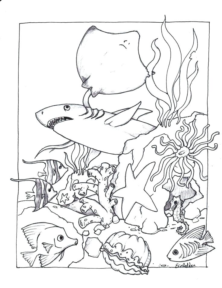 736x954 Ocean Coloring Pages Coloring Pages Of The Ocean Ocean Coloring