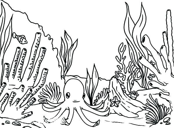 Ocean Plants Drawing