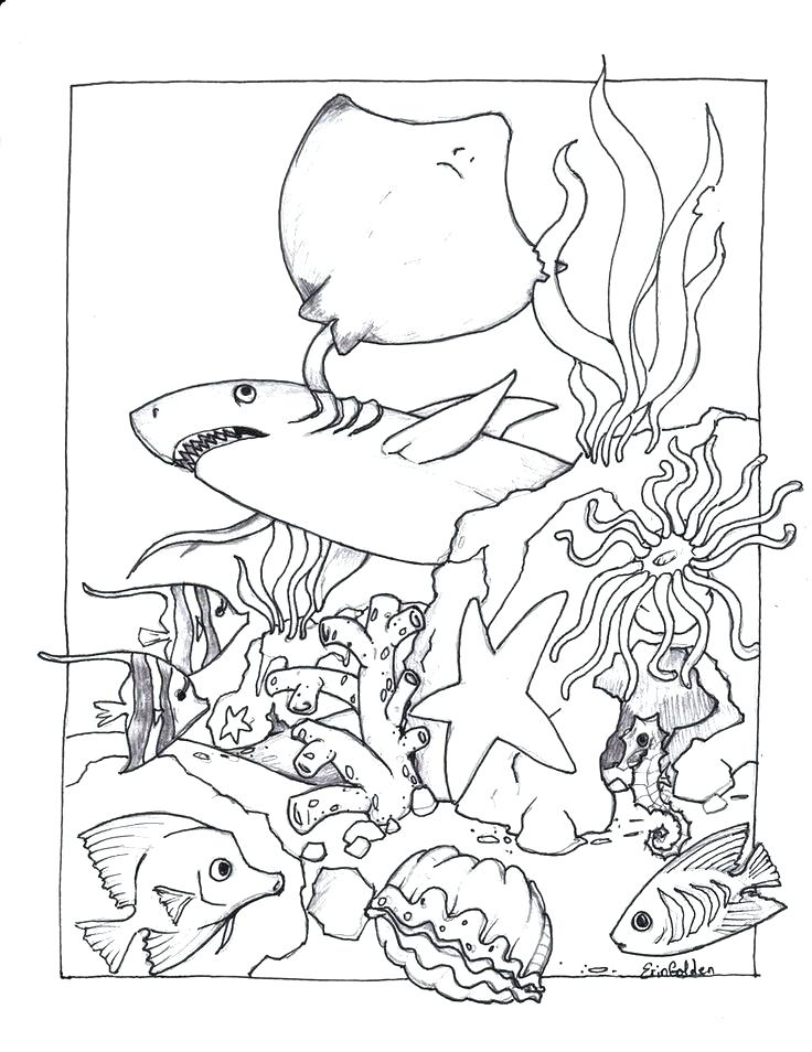 Ocean Plants Drawing At Getdrawings Com