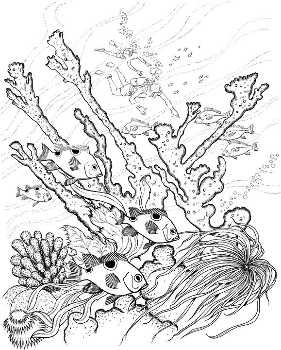 579x720 Adult Ocean Coloring Pages Page For Kids