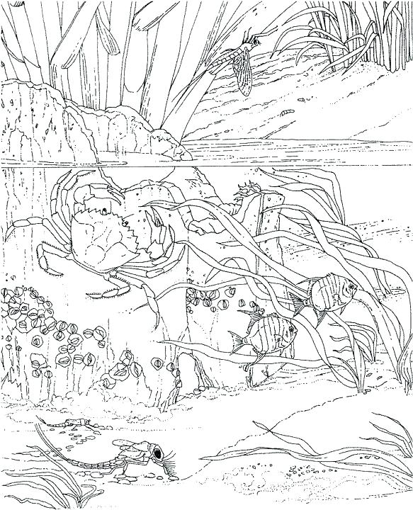583x720 Best Of Ocean Coloring Pages Pictures Ocean Coloring Pages Prints