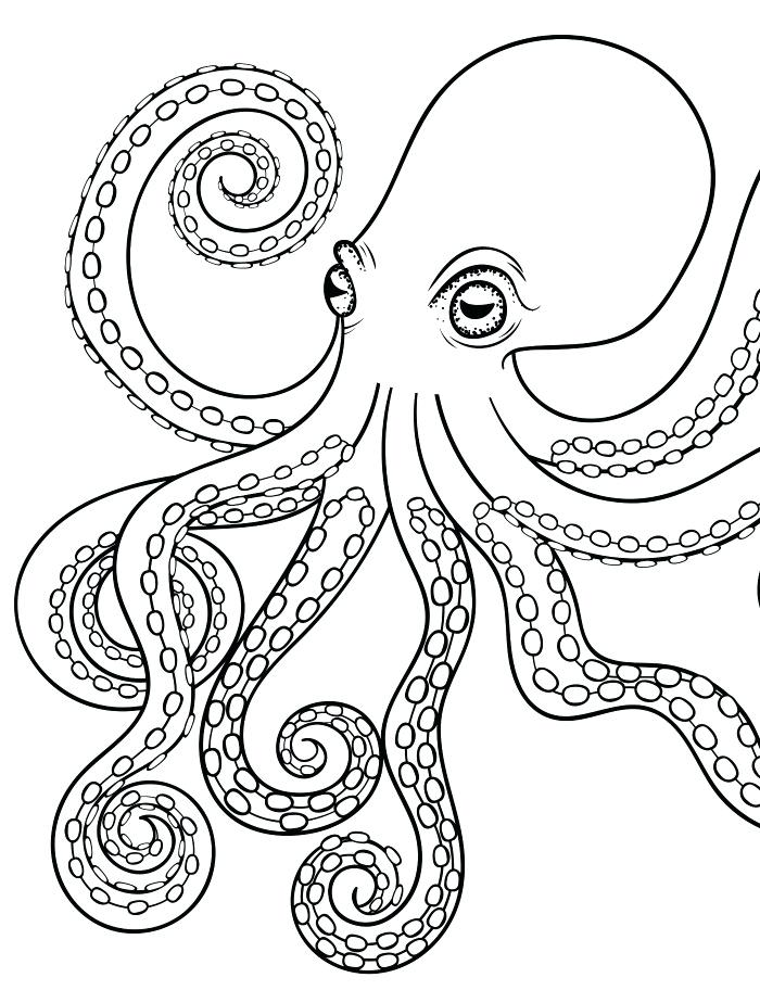 700x924 Octopus Color Page Kids Drawing Of An Octopus Coloring Page Letter