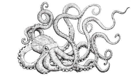 474x266 Black And White Octopus Drawing