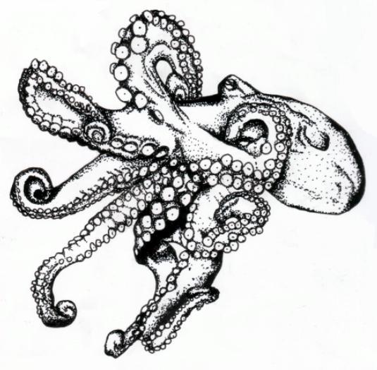 535x524 Octopus By Jschick
