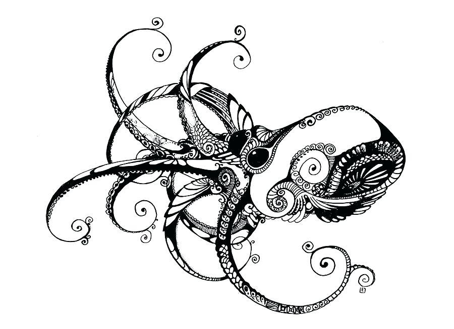 900x654 Octopus Drawings Transasia