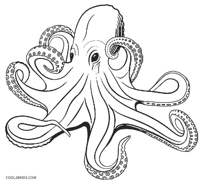 700x636 Octopus Color Page Octopus Coloring Pages Octopus Coloring Page