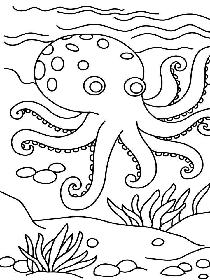 Octopus Drawing For Kids at GetDrawings.com | Free for personal use ...