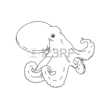 Octopus Line Drawing