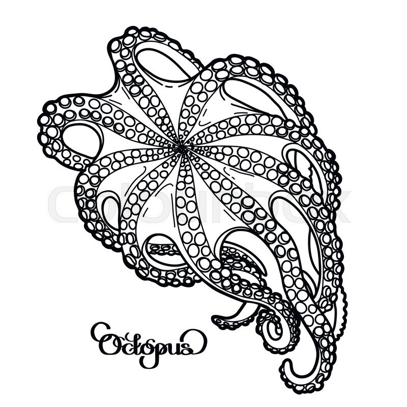 800x800 Graphic Octopus Drawn In A Line Art Style. Bottom View. Ocean