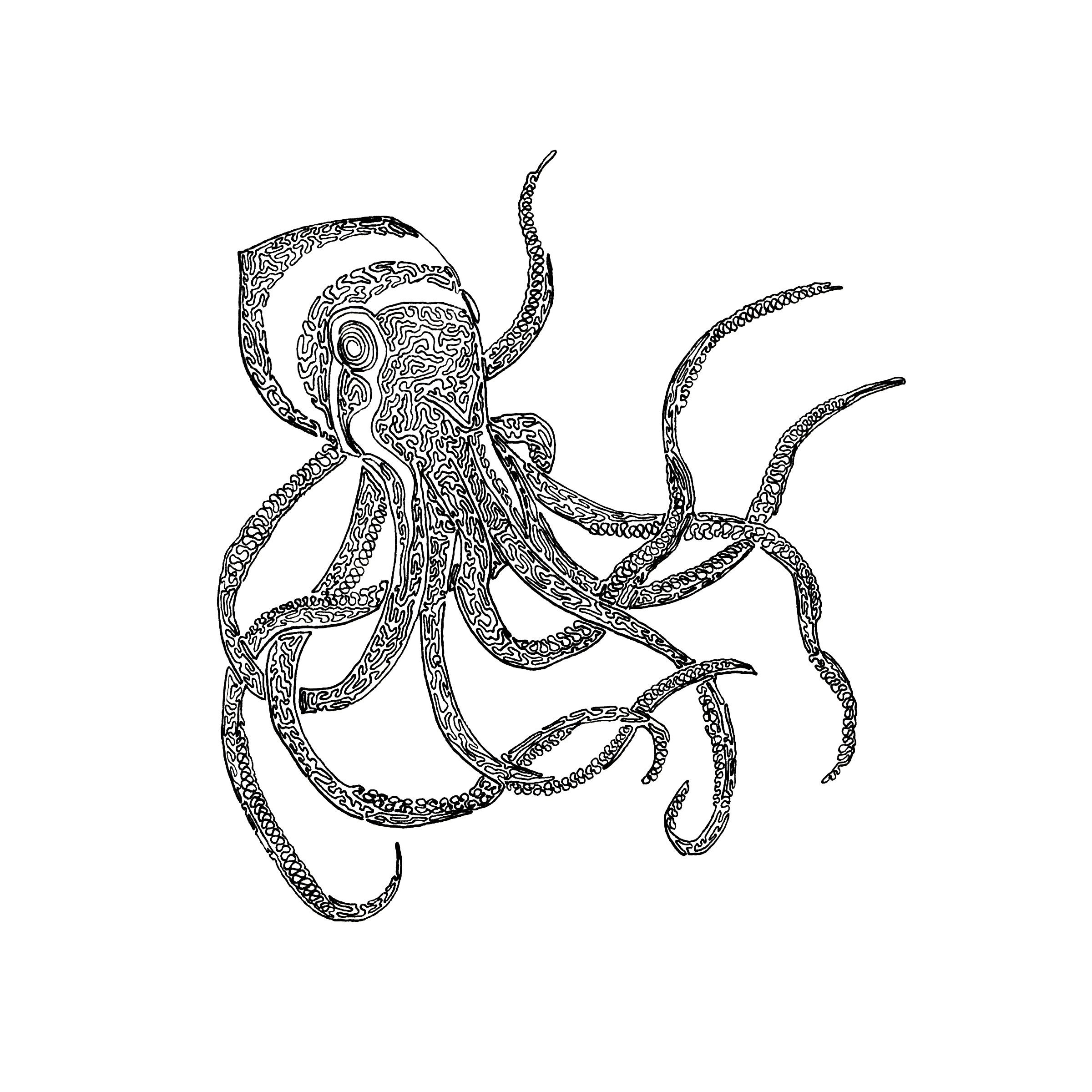 2400x2400 Octopus, Drawn With One Line. 8x10 With Micron 01.