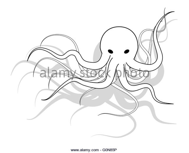 640x518 Octopus Black And White Stock Photos Amp Images