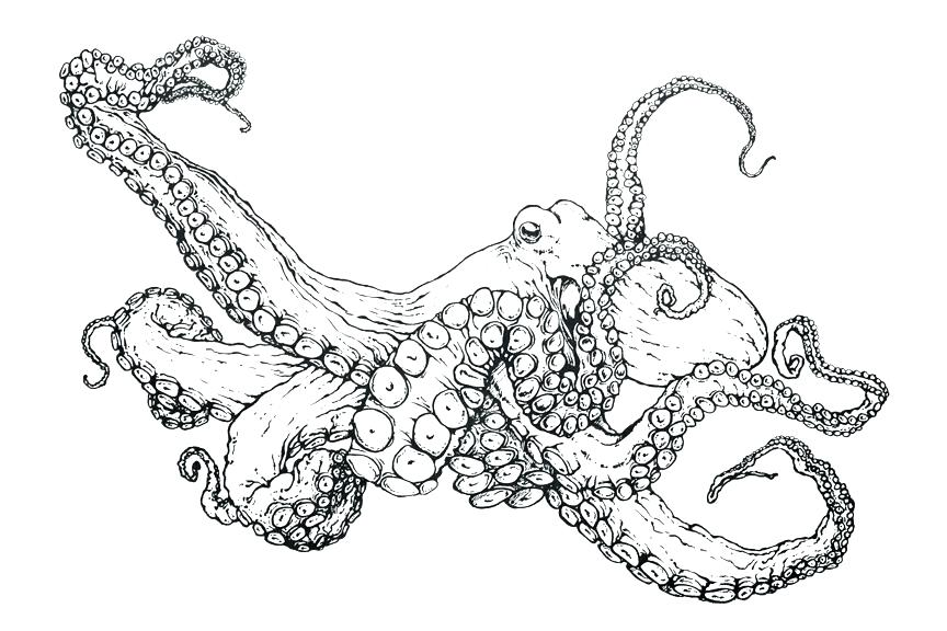 864x576 Octopus Coloring Book As Well As Coloring Pages Octopus Octopus