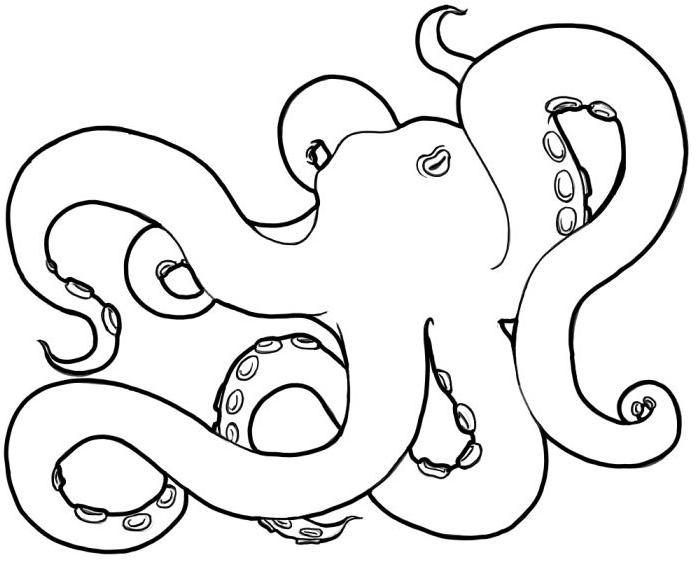 700x564 Octopus Lineart By Imaginarygoddess