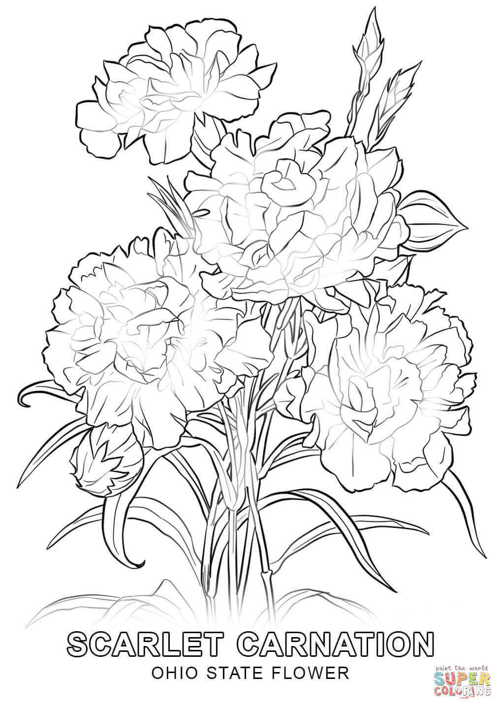1020x1440 Ohio State Flower Coloring Page Free Printable Pages