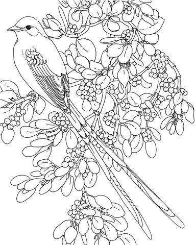382x480 Oklahoma Scissor Tailed Flycatcher And Mistletoe Flower Coloring