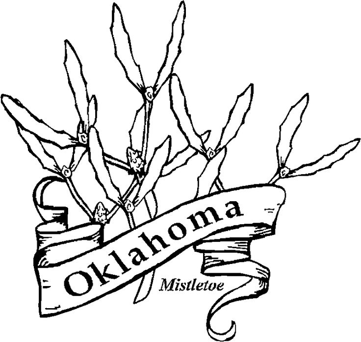 736x697 Oklahoma State Flower Coloring Page Oklahoma Indian Blanket State