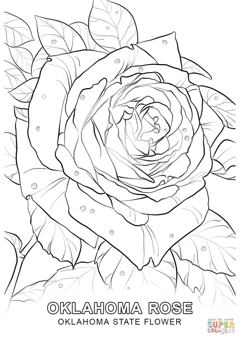 1020x1440 Oklahoma State Flower Coloring Page Free Printable Coloring
