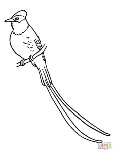 225x300 Scissor Tailed Flycatcher Oklahoma State Bird Download Coloring