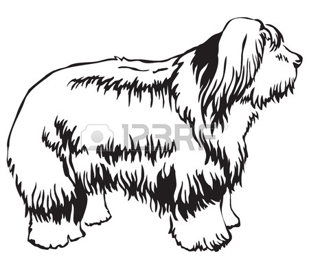 Old English Sheepdog Drawing