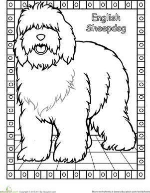 301x387 Color The English Sheepdog English Sheepdog, English And Creativity