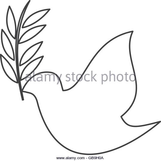 539x540 Dove With Olive Stock Photos Amp Dove With Olive Stock Images
