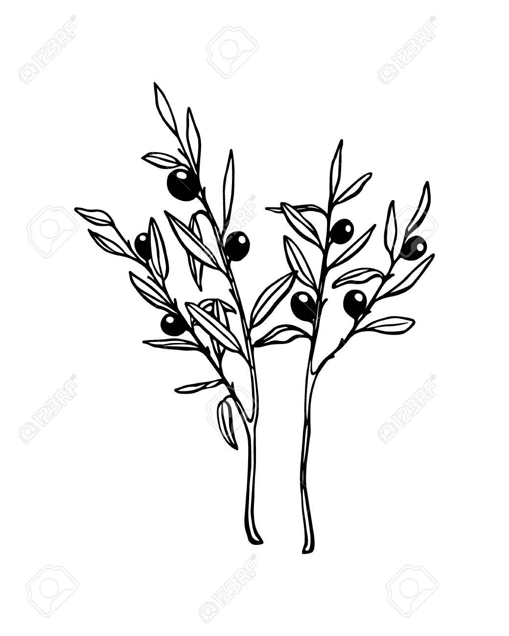 1040x1300 Hand Drawn Olive Branches. Beautiful Ink Drawing. Royalty Free