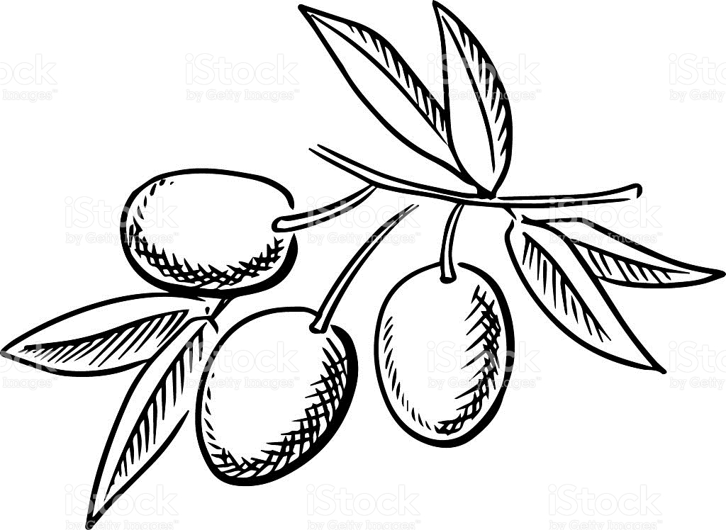 1024x748 Olive Clipart Black And White