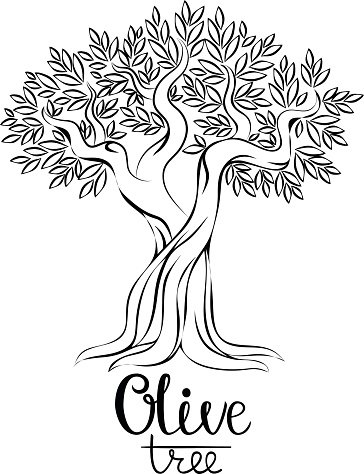 364x474 Olive Tree Vector Stock Vectors