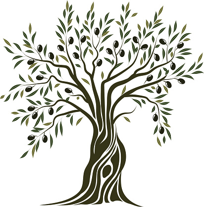 412x418 Olive Tree Vector Art Illustration Vectors Vector