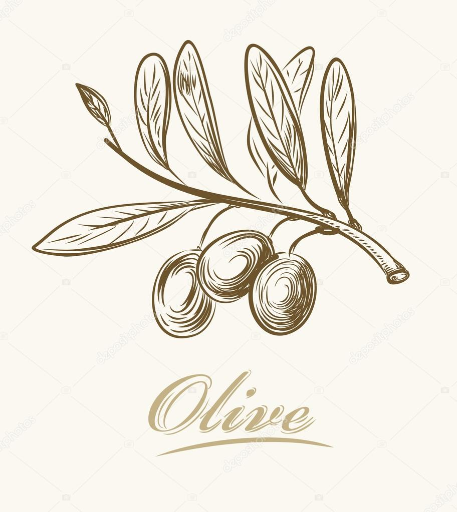 912x1023 Fresh Olive Stock Vector Bioraven