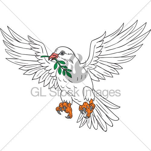 500x500 Dove With Olive Leaf Drawing Gl Stock Images
