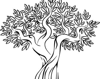 340x270 Olive Tree Clipart Black And White