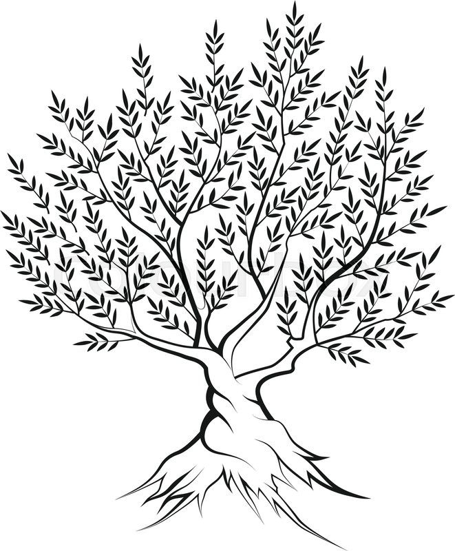 661x800 Olive Tree Outline Silhouette Icon Isolated On White Background