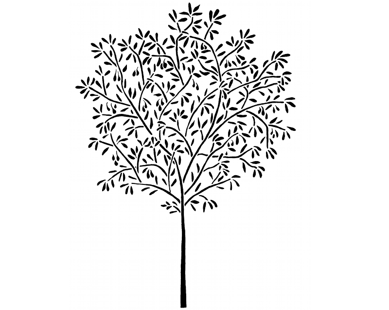 Olive Leaf Drawing At Getdrawingscom Free For Personal