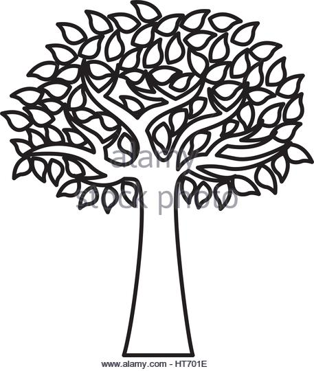 457x540 Olive Tree Stock Vector Images