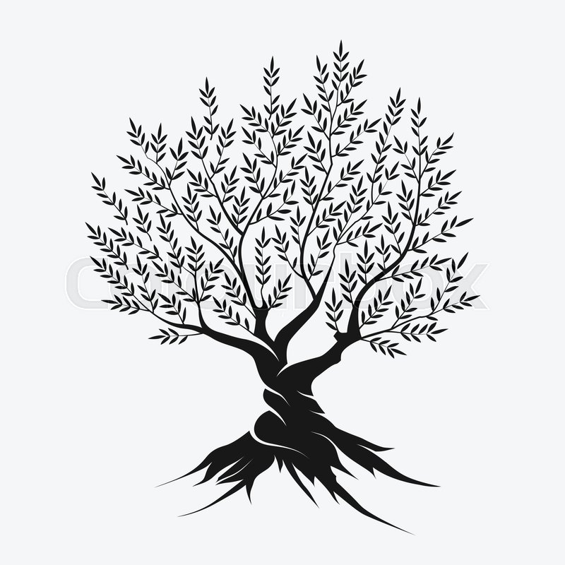 800x800 Olive Tree Silhouette Icon Isolated On Gray Background. Stock