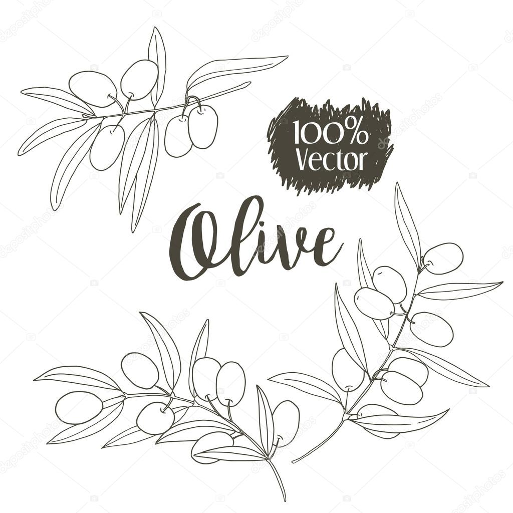 1024x1024 Vector Sketch Of Olive Tree Branch Stock Vector Zvegeniya