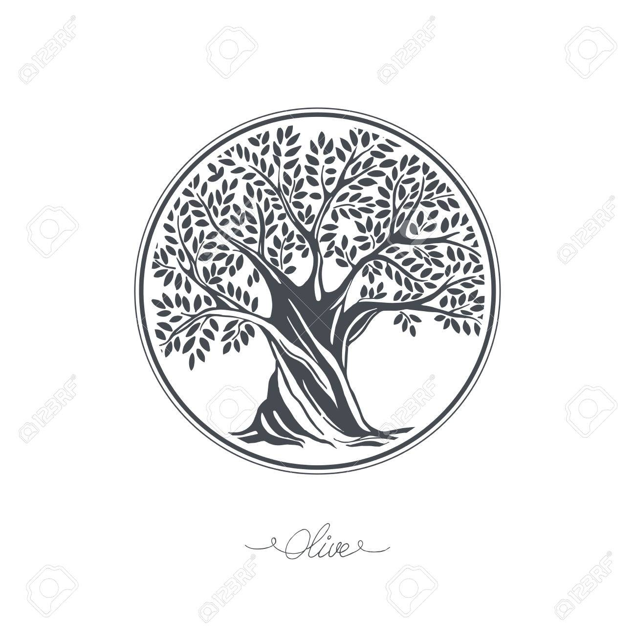 1299x1300 Hand Drawn Olive Tree. Vector Sketch Illustration Royalty Free