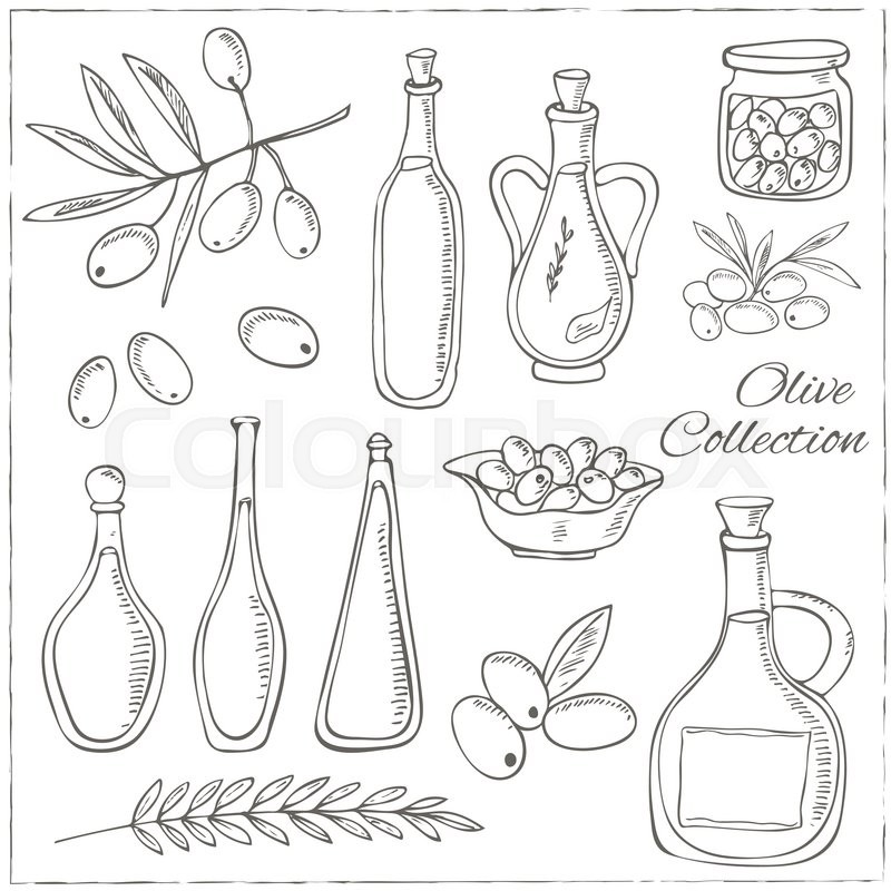 800x800 Olive Sketch Set With Tree Branch And Oil Bottle. Vintage