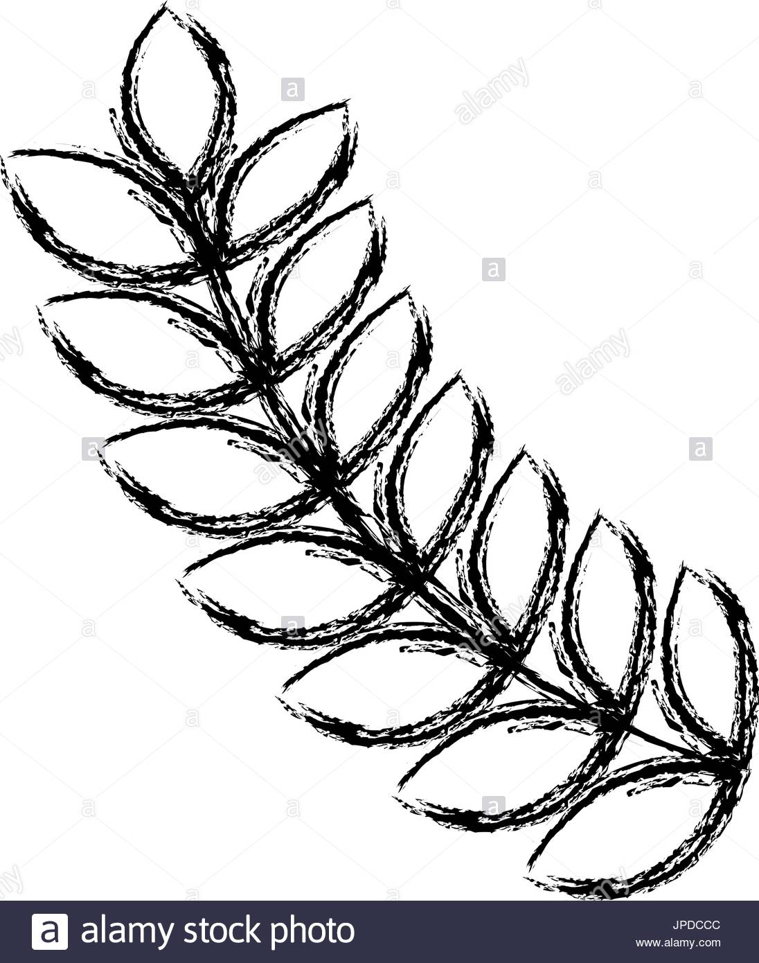 1096x1390 Olive Wreath Stock Photos Amp Olive Wreath Stock Images