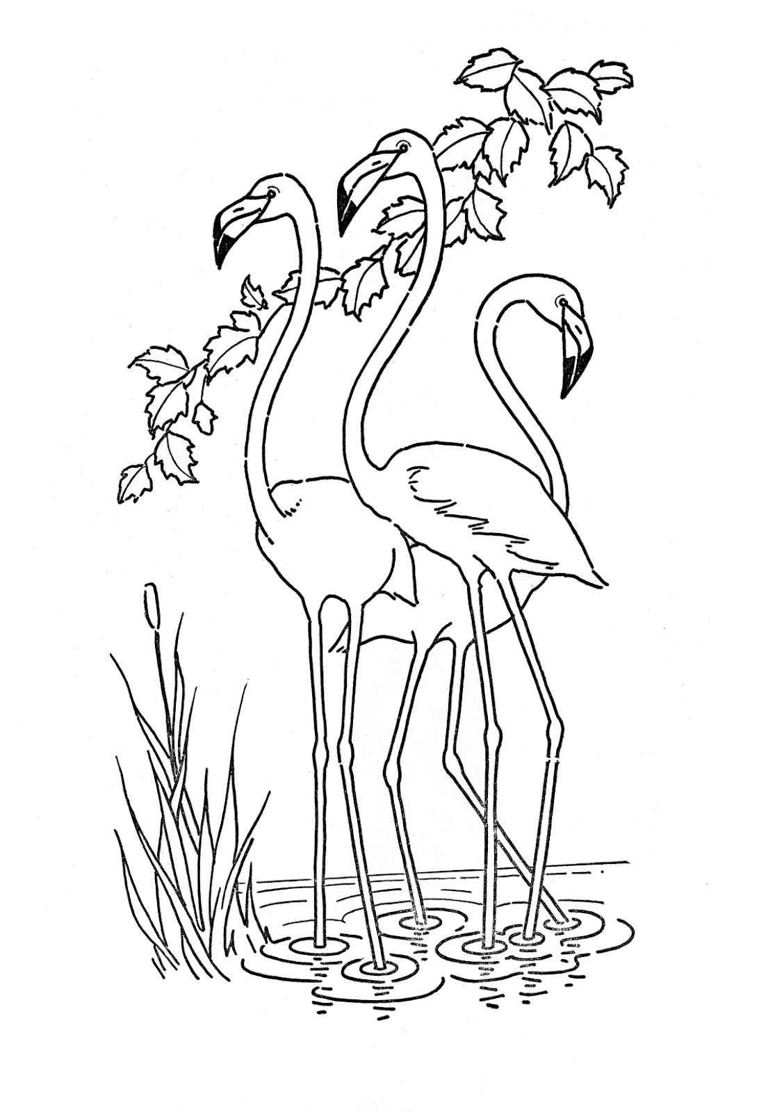 1115x1600 Opportunities Flamingo Coloring Page Pages Drawing For Kids Free