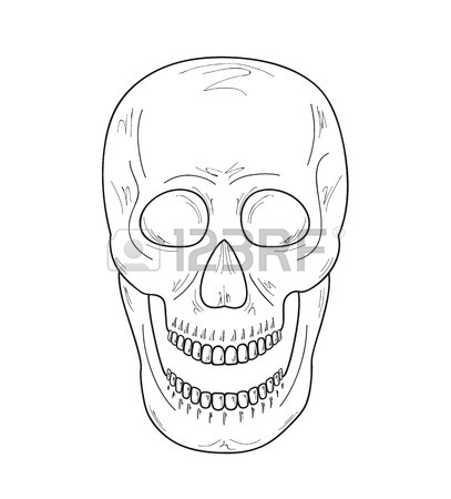 407x450 Skull With Vampire Teeth On White Background, Vector, Sketch